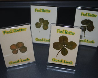Package of 4 Good Luck Real Four Leaf Clover Get Well Greetings