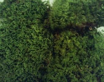Live Moss Variety Sampler Pack