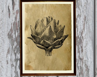 Food poster Kitchen decor Artichoke print AK351