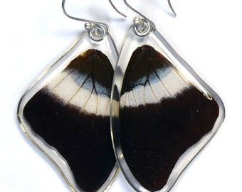 Real Violet-banded Palla Butterfly (Palla violinitens) (top/fore wings) earrings