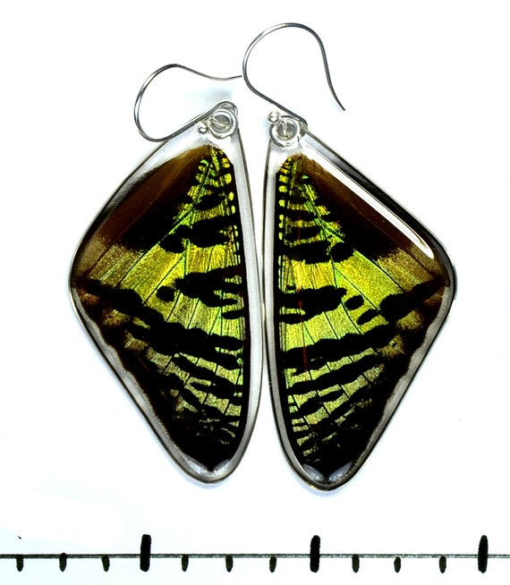 Real Sunset Moth earrings (top/fore wings)