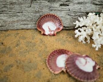 Beach Decor Seashells Flat Mexican Scallop Shells - 5 pcs for Nautical Decor, Beach Weddings or Crafts