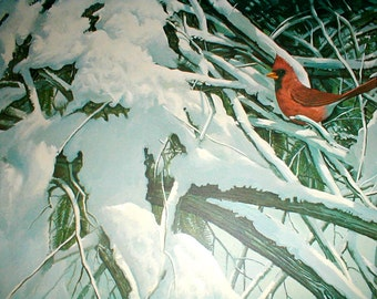 Glenn Robertson *Late Snow* Print *Cardinal Sitting In Snowy Trees *Nice Woodland Print*