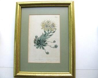 Vintage print, botanical print, gilded wood frame, matted and glazed