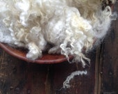 Border Leicester lamb crimps - Doll Hair- Santa Gnome Beards