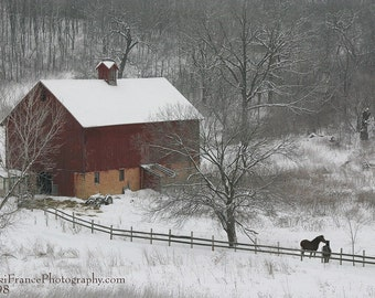 Nuzzling Horses near the old barn in winter