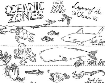 Oceanic Zones Educational Clipart, Earth Science, Hand Drawn Vector, Illustration drawing vectors, Teachers Design Kit, Sketched by Nedti