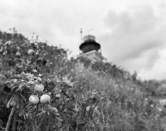 Beavertail Lighthouse Jamestown Rhode Island Black and White Photography Print