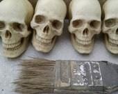 Pair of Catacomb Skulls, small realistic human skulls, anatomical study, Cabinet of Curiosities, Cast Shadows Studio, by Richard Chalifour