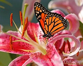 Monarch Butterfly, Fine Art Photography, Butterfly Photography, Flower Photography, Nature Photography