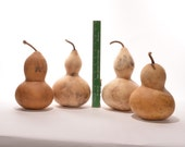 Four (4) Small Bottle Gourds, natural gourds, dried gourds