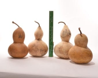 Five (5) Small Bottle Gourds, natural gourds, dried gourds