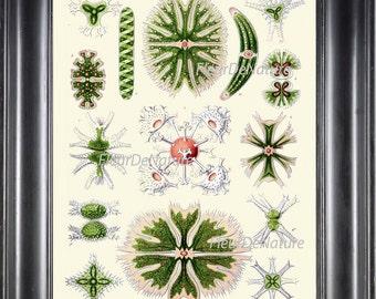 Ocean Print Ernst Haeckel 8X10 Art 36 Beautiful Antique Vintage Coral Botanical Sea Ocean Plants Nature Luxury Home Wall Room Decor Plate