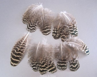 Black and Tan Peacock Feathers