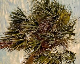 Palm Tree Tropical  - Fine Art Photograph Print Picture