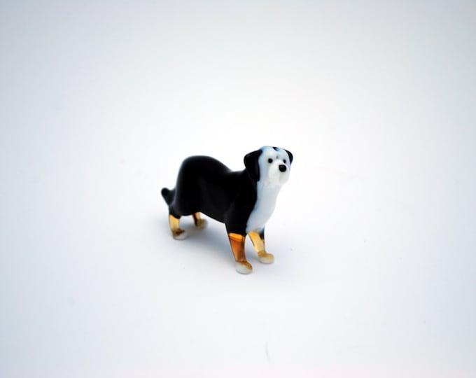 e31-10 Bernese Mountain Dog