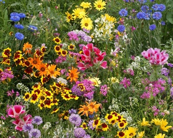 Heirloom Flower Seeds, Wildflower Mix, Cover a Large Area, Attracts Butterflies, Annual and Perennial Mix, 100 Seeds