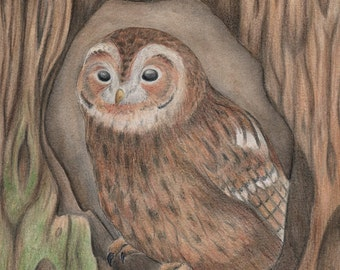 Tawny Owl Original Artwork - Watercolour and Coloured Pencil Mixed Media - SALE
