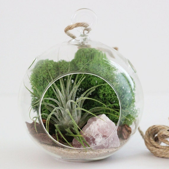 Rose Quartz Air Plant Terrarium Kit with Green Moss || Small Round Hanging