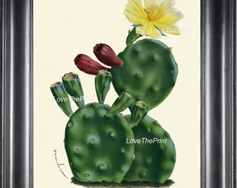 BOTANICAL PRINT HOUTTE  Art Print 93 Beautiful Yellow Cactus Blooming Flower Tropical Garden Nature Home Wall Decor Picture to Frame