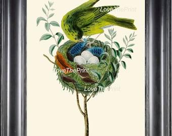 BIRD EGGS  Art Print B5 Beautiful Antique Yellow Canary Bird Eggs Nest Feather Decoration Wall Hanging Home Living Room Interior Design