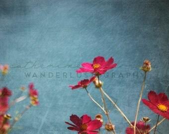 Seoul Cosmos 4 - Photographic print -  wanderlust, travel, bohemian, pink, blue, asia, boho,  korea 12 x 12, 16 x 16, 20 x 20