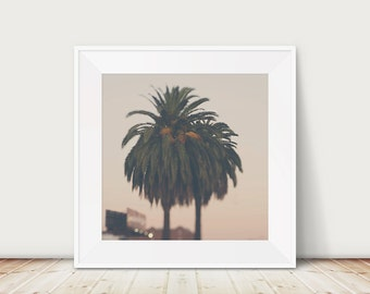 California photograph Los Angeles photograph palm tree photograph travel photography California print LA photograph palm tree print