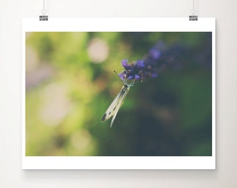 white butterfly photograph insect photograph animal photography butterfly print insect print lavender photograph summer print