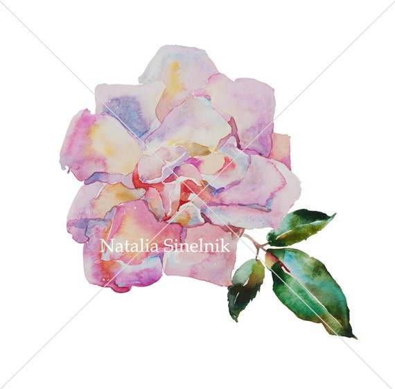 Pale pink rose digital download from original watercolor cottage chic watercolour painting clip art