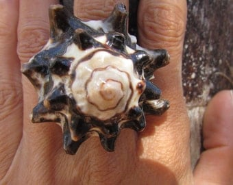 Sea Shell Ring Large Size