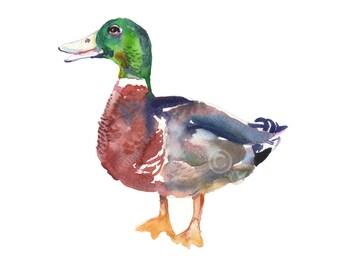 Duck 3  -  Size 8x10in - Watercolor  Art- Nursery Art Print
