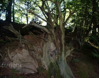 Tree Trunk Photo Digital Download