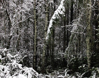 Winter Forest Landscape Photo. Snow Photography. Nature Photography. Photo Print, Framed Print, or Canvas Print. Home Decor.
