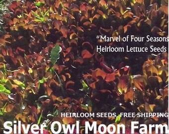 Marvel of Four Seasons , heirloom red lettuce seeds