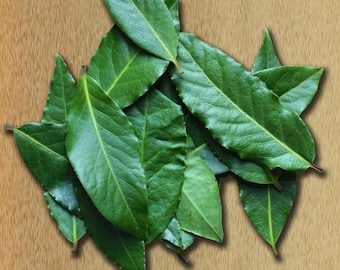 40 Fresh Picked Califorina Bay Leaves