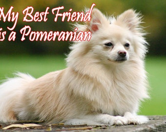 My Best Friend is a Pomeranian Dog Fridge Magnet 7cm by 4.5cm,