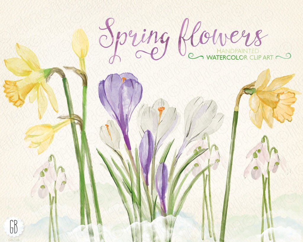 Watercolor early spring flowers narcissus crocus snowdrops for Spring flowers watercolor