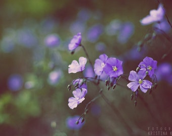WOODLAND FLOWERS photography print, flower macro print, 8x12