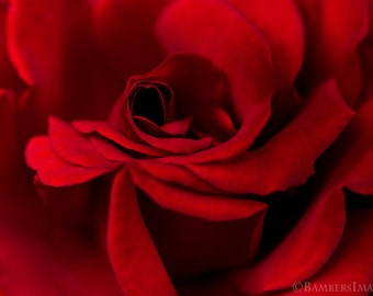 Red Rose Print, Rose Photo, Rose Photograph Decor, Red Wall Art, Rose Photography, Nature Print, Love, Velvety, Wall Art, A4 (210mm x 297mm)