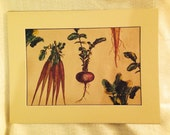 Botanical Root Plant Prints 18 x 24 Matted Ready to Frame All Recycled and Recyclable Materials.
