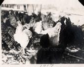 1917 Chicken Coop!  Vintage snapshot Photo
