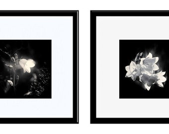 Black and White Photos, Fine Art Photography, 2 Print Set, Bluebells