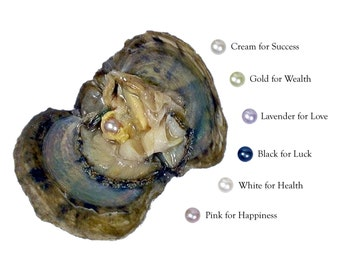 Pick A Pearl Oyster Kit Freshwater Pearl Wish Pearl Take Home Pearl Kit For Pearl Cage Necklace