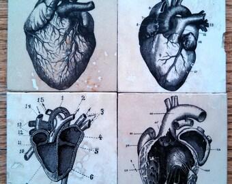 Anatomical Heart Tile Coasters - Set of 4 // Anatomy // Medical Art // Hearts // Love // Amore // dark decor // creepy // weird