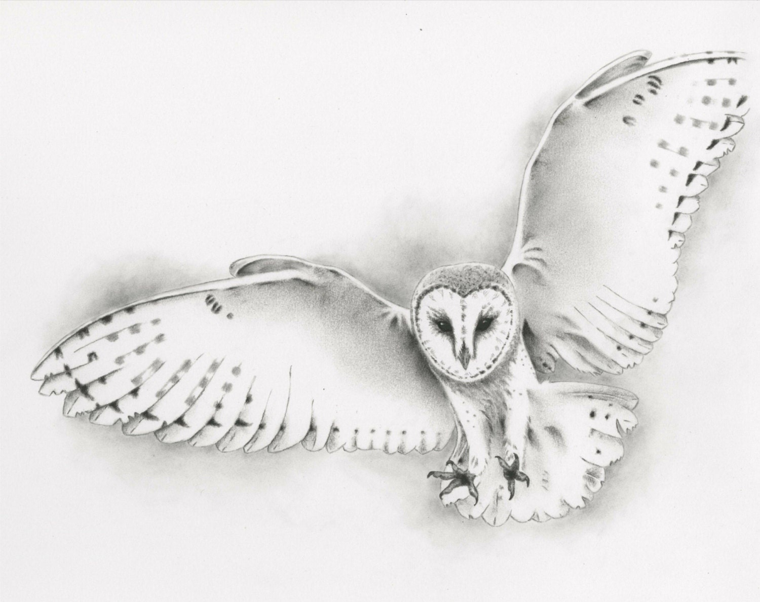 Original pencil flying barn owl drawing owl art barn owl for Owl beak drawing