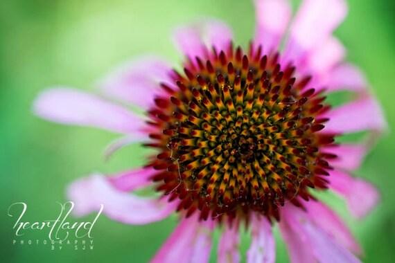 Large Wall Art Prints, Purple Flower Art Print, Green Wall Art Photography, Nature Photography Print, Big Art Prints, 24x36 Print Art