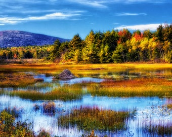 Duck Pond in Acadia