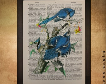 Blue Jay Dictionary Art Print Audubon Bird Wall Art Fine Art Print Home Decor Fine Print book da475