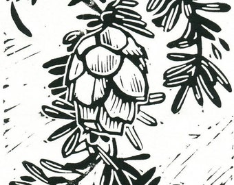 Western Hemlock (Tsuga heterophyla) - Linoleum Block Print - 5 x 7
