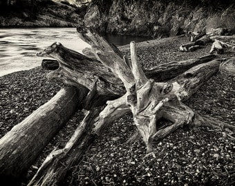 Beach Photography, Driftwood, Stone, Nature, Fine Art Black and White Photography, Monochrome, Wall Art, Home Decor, Pacific Northwest Zen